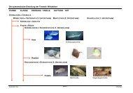 Die systematische Einteilung der Tierwelt: Wirbeltiere STAMM ...