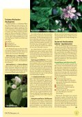 Pflanzliche Immunmodulatoren T ri - phytotherapie.co.at - Seite 4