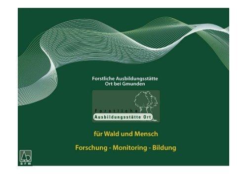 Bauholz – Zopfdurchmesser - BFW