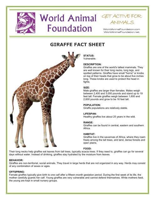GIRAFFE FACT SHEET - World Animal Foundation