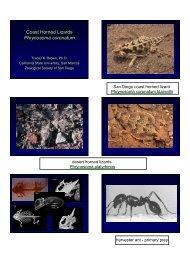 Coast Horned Lizards Phrynosoma coronatum - The Wildlife Society