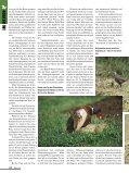 """Der """"Mythos"""" aus Italien - Seite 3"""