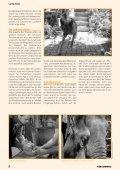 Tierschutz und Politik – Änderungen dringend notwendig! - Seite 4