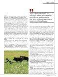 Så förebygger du risken för skador! - Protector Hundskydd - Page 2