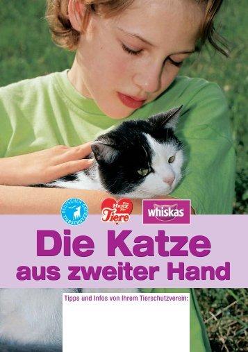 Katze aus zweiter Hand - Tierschutzverein Buchen