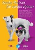 Katze aus zweiter Hand - Tierschutzverein Buchen - Seite 2