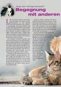 Katze aus zweiter Hand - Tierschutzverein Buchen - Seite 6