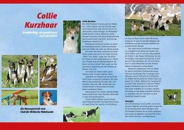 Collie Kurzhaar - ind17 @ srv14.incoweb.de