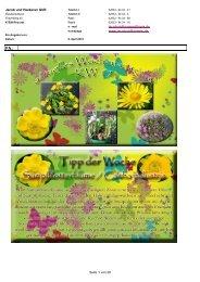 Paeonia lactiflora, Pfingstrose im 6 Liter Roma Dekotopf - Jacob und ...