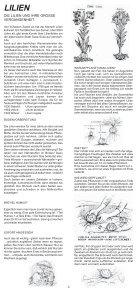 lilien - Albrecht Hoch - Seite 3