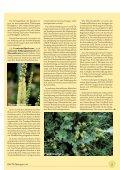 Gynäkologie - phytotherapie.co.at - Seite 5