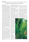 Kompetenz in Sachen Bambus Ihren wüchsigen Bambus finden Sie ... - Seite 5