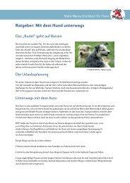 Ratgeber: Mit dem Hund unterwegs - Starke Pfoten