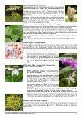 Zwiebeln Frühjahr 2012.indd - Seite 4