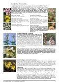 Zwiebeln Frühjahr 2012.indd - Seite 5