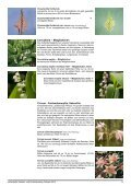 Zwiebeln Frühjahr 2012.indd - Seite 6