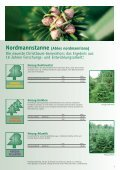 weihnachtSBaUM JUngpflanzen 2013 - Herzog.Baum - Seite 3