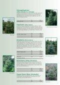 weihnachtSBaUM JUngpflanzen 2013 - Herzog.Baum - Seite 7