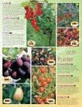 Smultronställets Vårtidning 2012 - Page 5