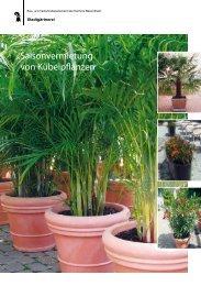 Saisonvermietung von Kübelpflanzen - Stadtgärtnerei