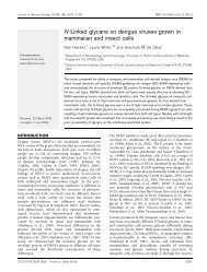 N-Linked glycans on dengue viruses grown in mammalian and ...