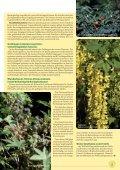 Der pflanzliche Arzneischatz Schwerpunktthema - phytotherapie.co.at - Seite 5