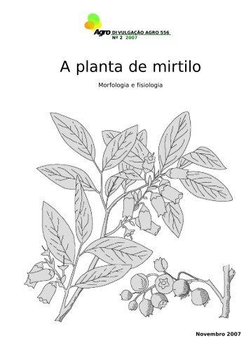 A planta de mirtilo - Morfologia e Fisiologia - INRB