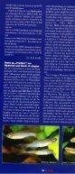 Hyphessobrycon robustulus - Senckenberg - Page 3