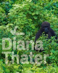 Diana Thater gorillagorillagorilla - Universalmuseum Joanneum