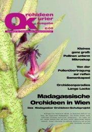 M a d a g a s s i s c h e Orchideen in Wien