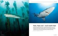Seit über 10 Jahren Ihr Tauchreisefinder! - Unterwasser