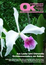 Aus Laelia wird Chironella Orchideenwandern am Balkan