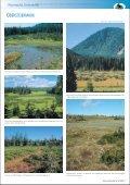 Moorreiche Steiermark - Seite 7