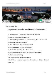 1. Lurche - Alpensalamander