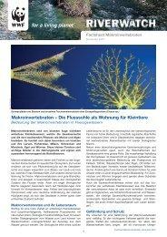 Makroinvertebraten – Die Flusssohle als Wohnung ... - WWF Schweiz