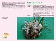 Pilze der Woche 33 - Verein für Pilzkunde Basel