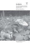 Großpilze - Landesamt für Umwelt, Wasserwirtschaft und ... - Seite 3