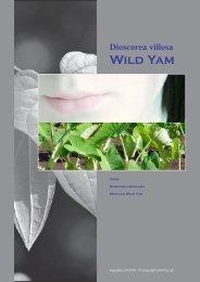 1 Wild Yam - Heilpflanzen und Samen