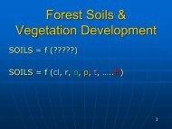 Forest Soils & Vegetation Development