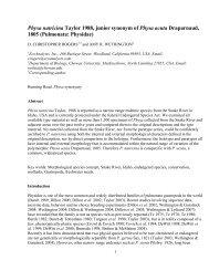 Physa natricina Taylor 1988, junior synonym of Physa acuta ...