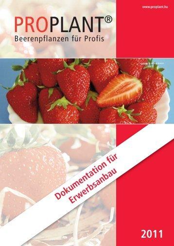 Erdbeeren - Proplant Kft.