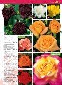 auch Rosen haben Freunde - Blumenwelt Hödnerhof - Seite 2