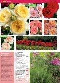 auch Rosen haben Freunde - Blumenwelt Hödnerhof - Seite 3