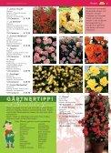 auch Rosen haben Freunde - Blumenwelt Hödnerhof - Seite 4