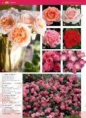 auch Rosen haben Freunde - Blumenwelt Hödnerhof - Seite 5