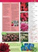 auch Rosen haben Freunde - Blumenwelt Hödnerhof - Seite 6