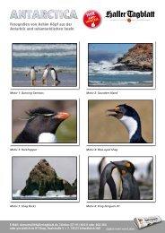 Fotografien von Achim Köpf aus der Antarktis und ... - Haller Tagblatt