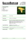 blasser Kräuterseitling - Seite 2