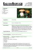 blasser Kräuterseitling - Seite 3