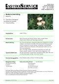 blasser Kräuterseitling - Seite 5
